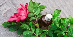Read more about the article Caring for your Essential Oils